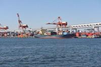 横浜港でもヒアリ約500匹見つかる