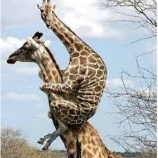 ラブラブな動物達の画像