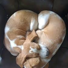 犬の寝顔画像をください