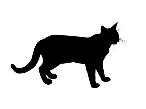 「うちの猫には…明らかに『親指』がある」人気を呼んでいた1枚:らばQ