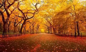 季節の中でいちばん秋が好きな人