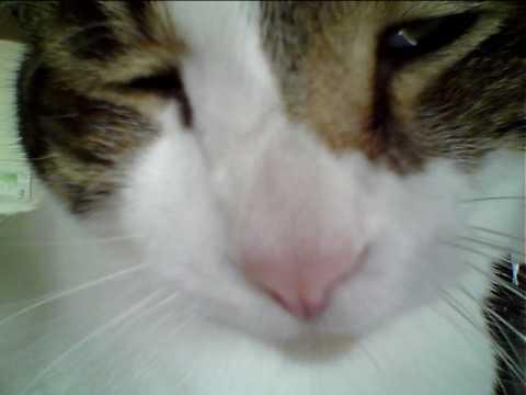 猫の喉のゴロゴロ音(高音質) - YouTube