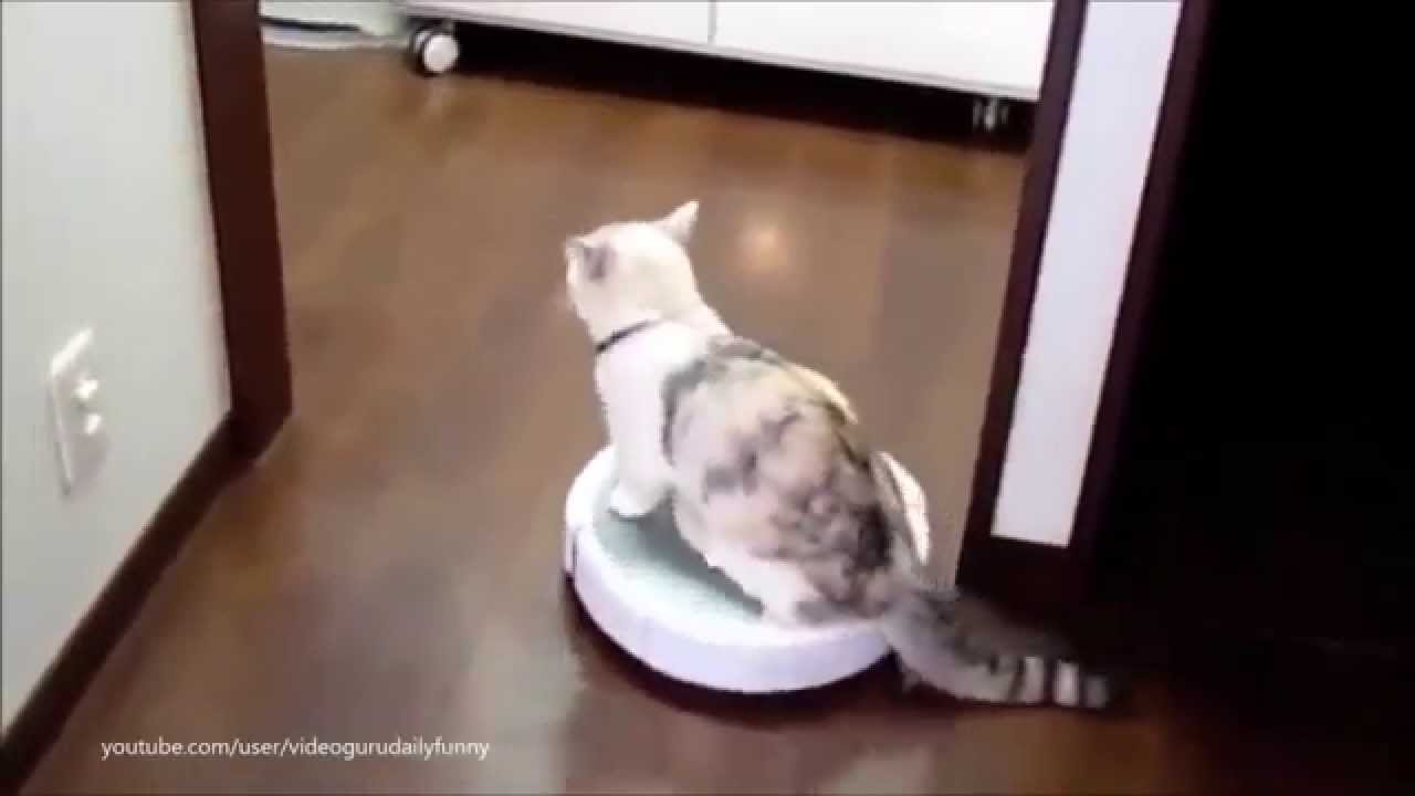 Cats on Roombas: BEST Compilation - YouTube