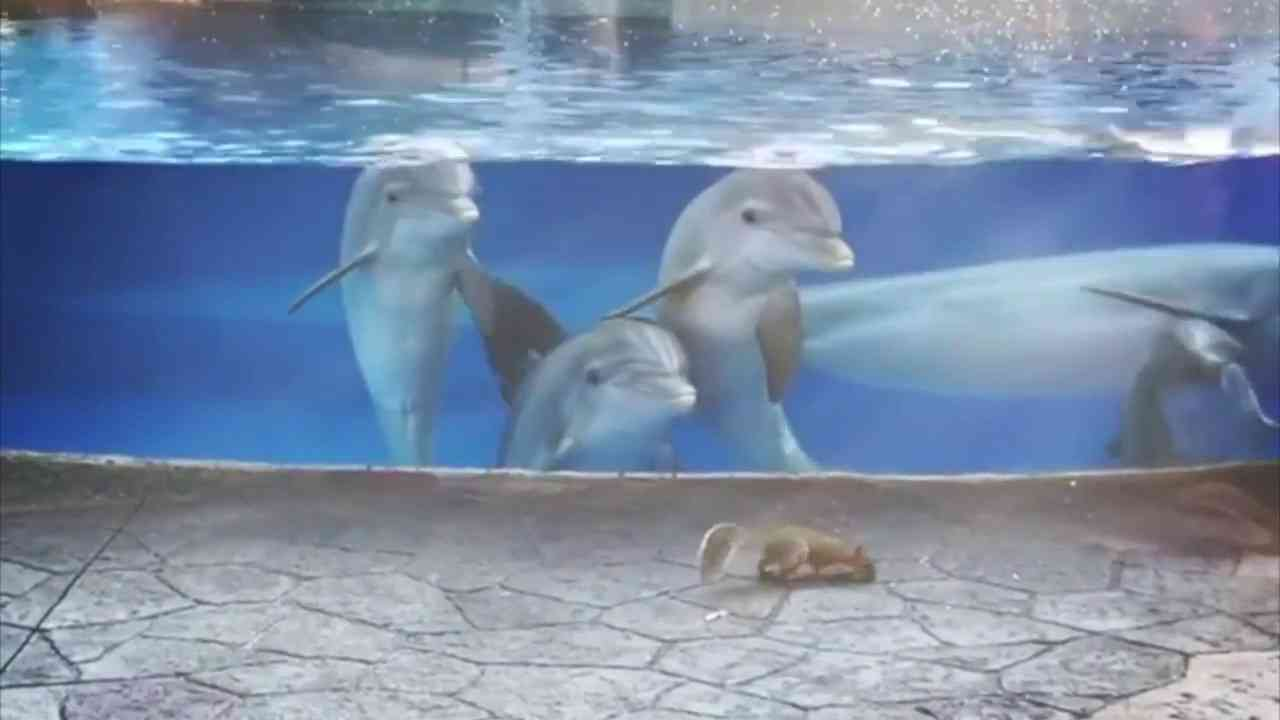 Cute Dolphins Check Out Squirrels at Seaworld Orlando Dolphin Nursery - YouTube