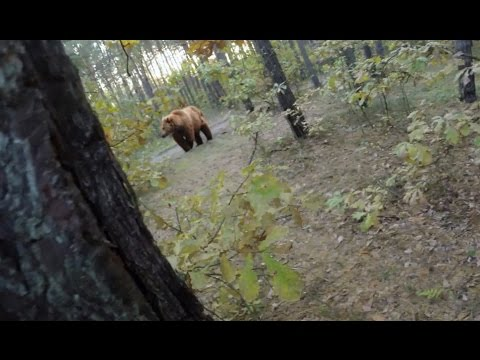 Bear Attack, Man is trying to run away from attacking Bear: GoPro - YouTube