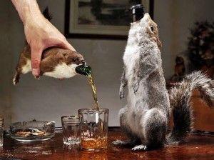 いろんな酒瓶を見たい!