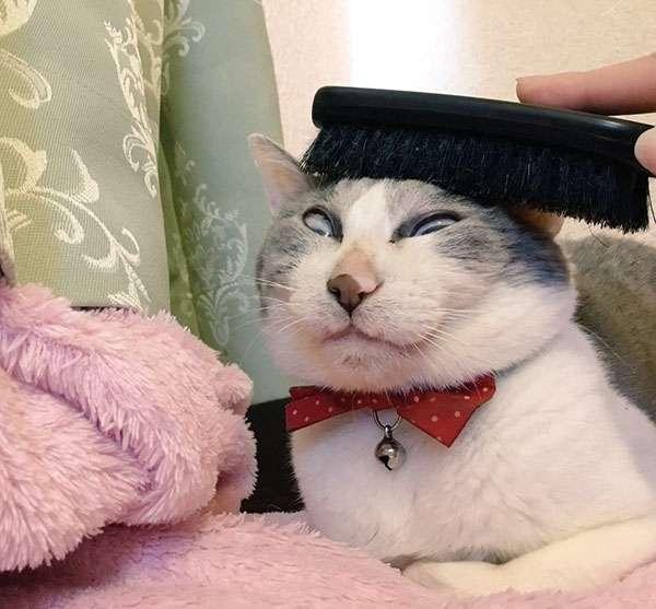 何そのギャップ!?ブラッシングが気持ちよすぎた猫、とんでもない顔に