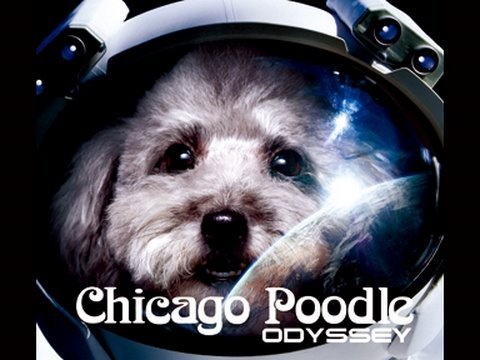 Chicago Poodle 「ODYSSEY」 - YouTube