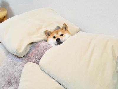 【睡眠事情】布団派ですか?ベッド派ですか?