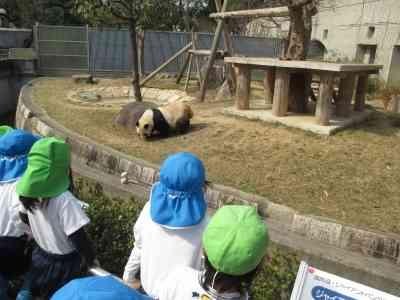 シャンシャン人気で影薄く パンダ5頭いる和歌山県の嘆き