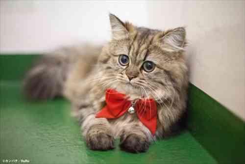 袋とじは猫ちゃんのヘアヌード ディープすぎる猫雑誌「週ニャン大衆」
