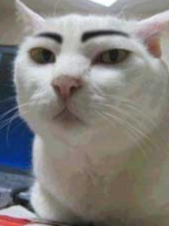 眉毛のある動物の画像下さい
