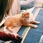 @a.cat.named.toby • Instagram photos and videos