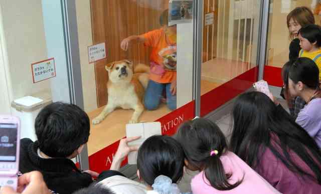 「ザギトワ効果」で秋田犬のぬいぐるみが大変なことに。7月まで品切れ状態続く「秋田犬バブル」