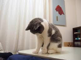 月曜日が迫ってきています。明日仕事・学校行きたくない気持ちを画像で表すトピ