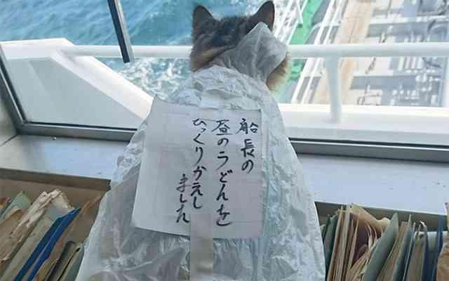 必死な表情…からあげを盗もうとした罪で飼い主に逮捕された猫が話題に!