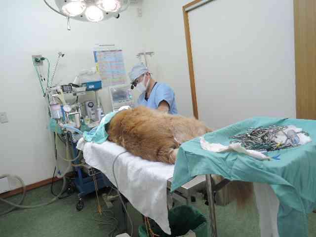 ペットが手術を受けた事のある方。
