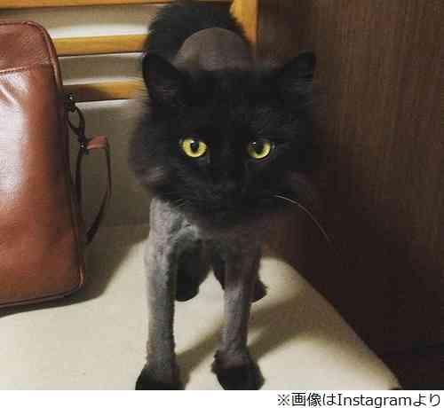 最上もがの愛猫、激変したサマーカット姿が話題
