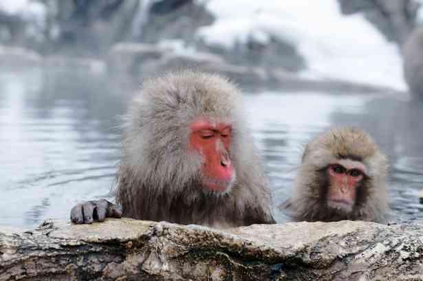 こじつけ? 韓国人が日本人を「サル」と呼ぶ理由