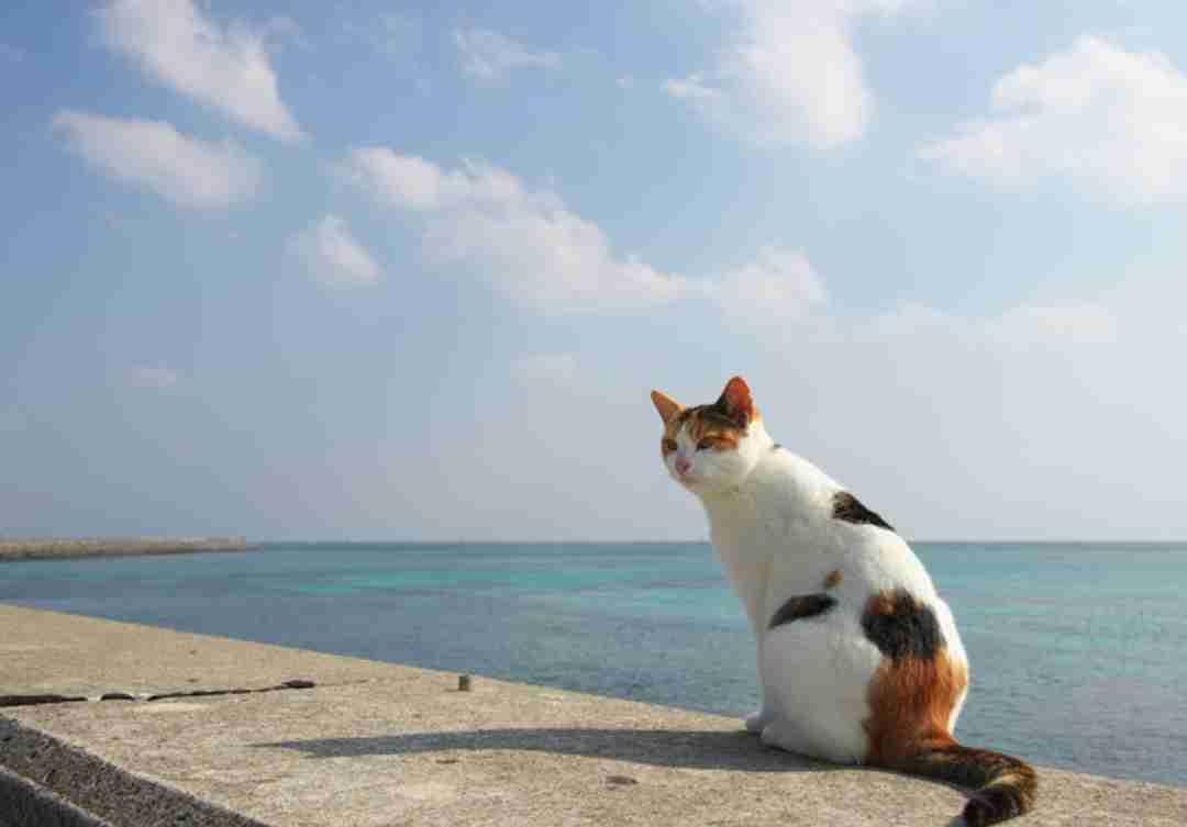 【画像】夏×猫