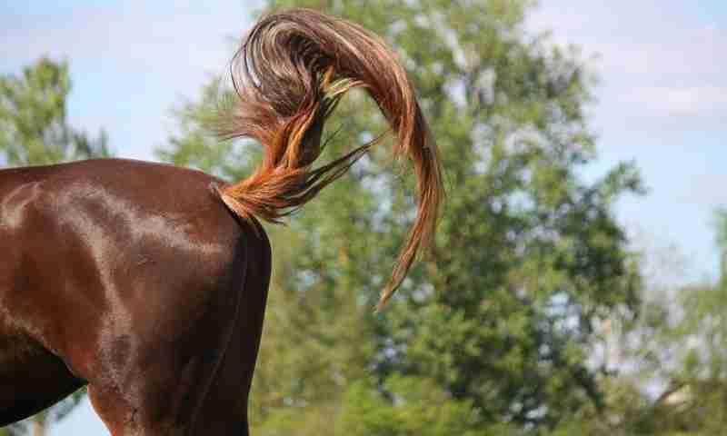 『馬のシッポってどうなってるの?』 馬事センターが発表した「答え」がコチラ!