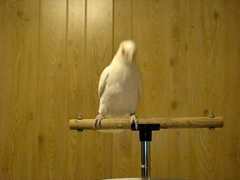 Frostie Dancing To Shake Your Tail Feather! ©Karla K. Larsson - YouTube