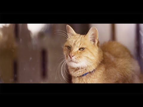 """【YKK AP公式】窓と猫の物語 「幼なじみ」篇 60秒 Story of a window and a cat """"childhood friend"""" - YouTube"""