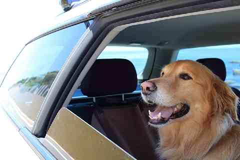 車内に犬6匹放置して全滅、人より熱中症になりやすいのに...「動物虐待」では? - 弁護士ドットコム