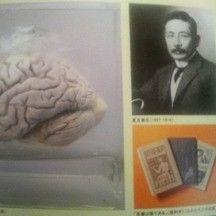 【雑学】歴史上のトリビア【夏目漱石の脳は東大保管・豊臣秀吉は6本指などなどなど】 - NAVER まとめ