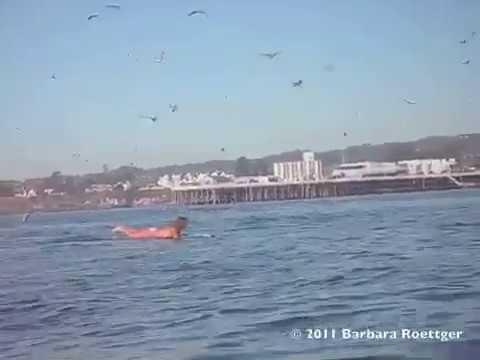 危機一髪!あやうく巨大クジラの餌 - YouTube