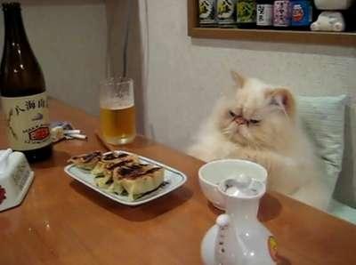 自分が猫だったらどんな猫ですか?