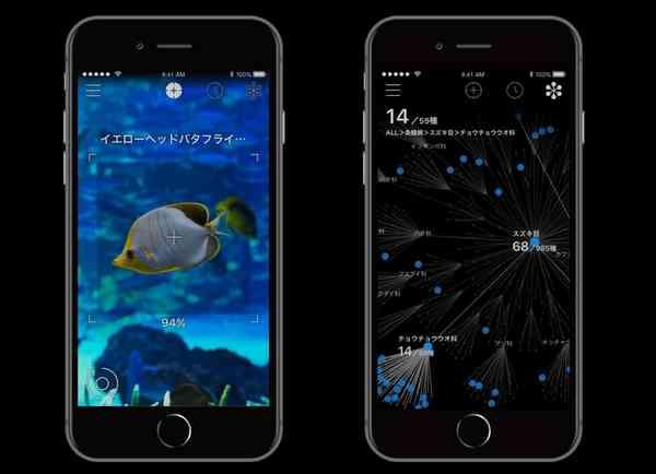 生物にiPhoneをかざすと名前がわかるアプリ「LINNÉ LENS」、第一弾は魚類中心4000種類