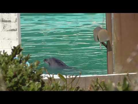イルカのハニーを助けて! 閉鎖水族館に残され、「譲渡先早く決めてあげて」 - YouTube