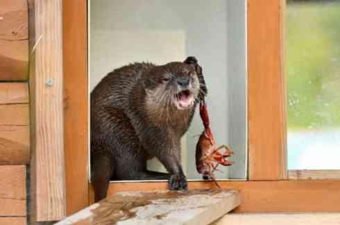 なんか言いたそうな動物の画像を貼るトピ