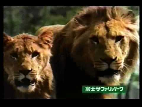 CM 富士サファリパーク - YouTube