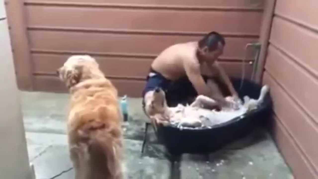Pampered Pooch gets relaxing spa day and can't stop grinning (ORIGINAL) HD VIDEO - YouTube