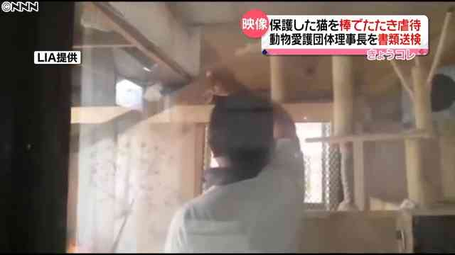 保護猫を棒で叩くなどの虐待か 動物愛護団体の理事長が書類送検