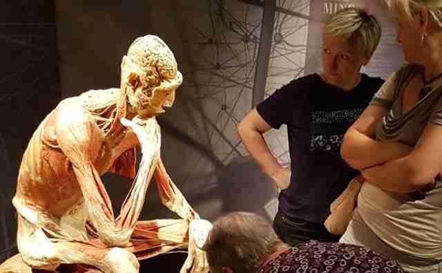 """リアルを超越した""""人体標本""""はどこからきたのか 英国でイベント主催者を直撃取材 (1/2)"""