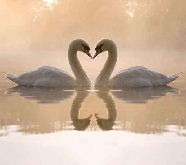 【画像】動物同士のキス