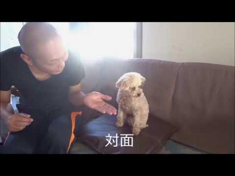 よその犬にお手を教える - YouTube