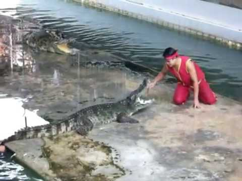 Unexpected accident at crocodile show - YouTube