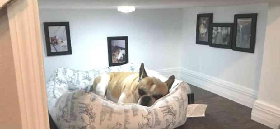 階段下につくられた、ワンちゃんのための完璧なベッドルーム! - ペット日和