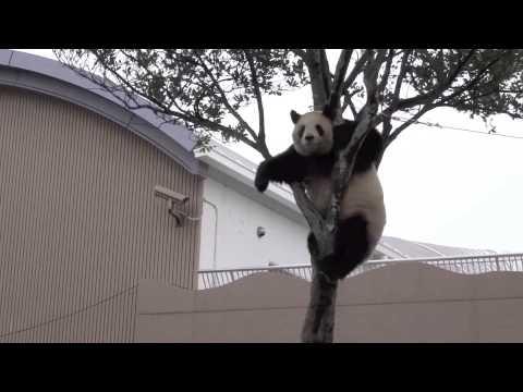 2014.4 木登り良ちゃん - YouTube