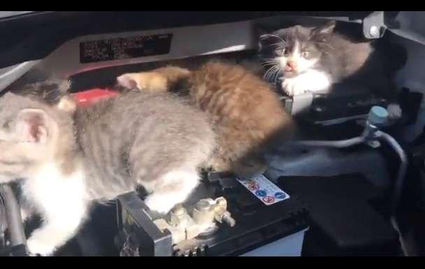 まさかの事態 ボンネットを開けると子猫がわらわら
