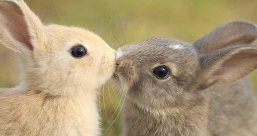 最後にキスしたのはいつですか?