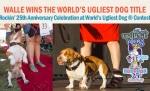 アグリエストドッグ(Ugliest Dog)~世界一醜いとして有名な犬
