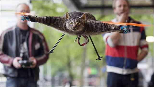 思い出は永遠に、死んだ飼い猫を剥製にしたヘリコプター「Orvillecopter」 - DNA