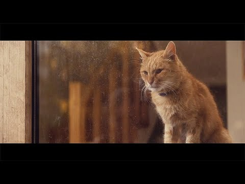 "【YKK AP公式】窓と猫の物語 「幼なじみ」篇 30秒 Story of a window and a cat ""childhood friend"" - YouTube"