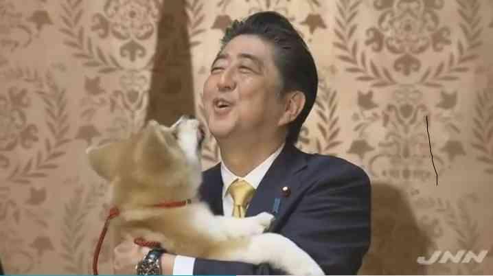 「仲良く暮らしてます」 ザギトワがマサルと先住猫の写真公開