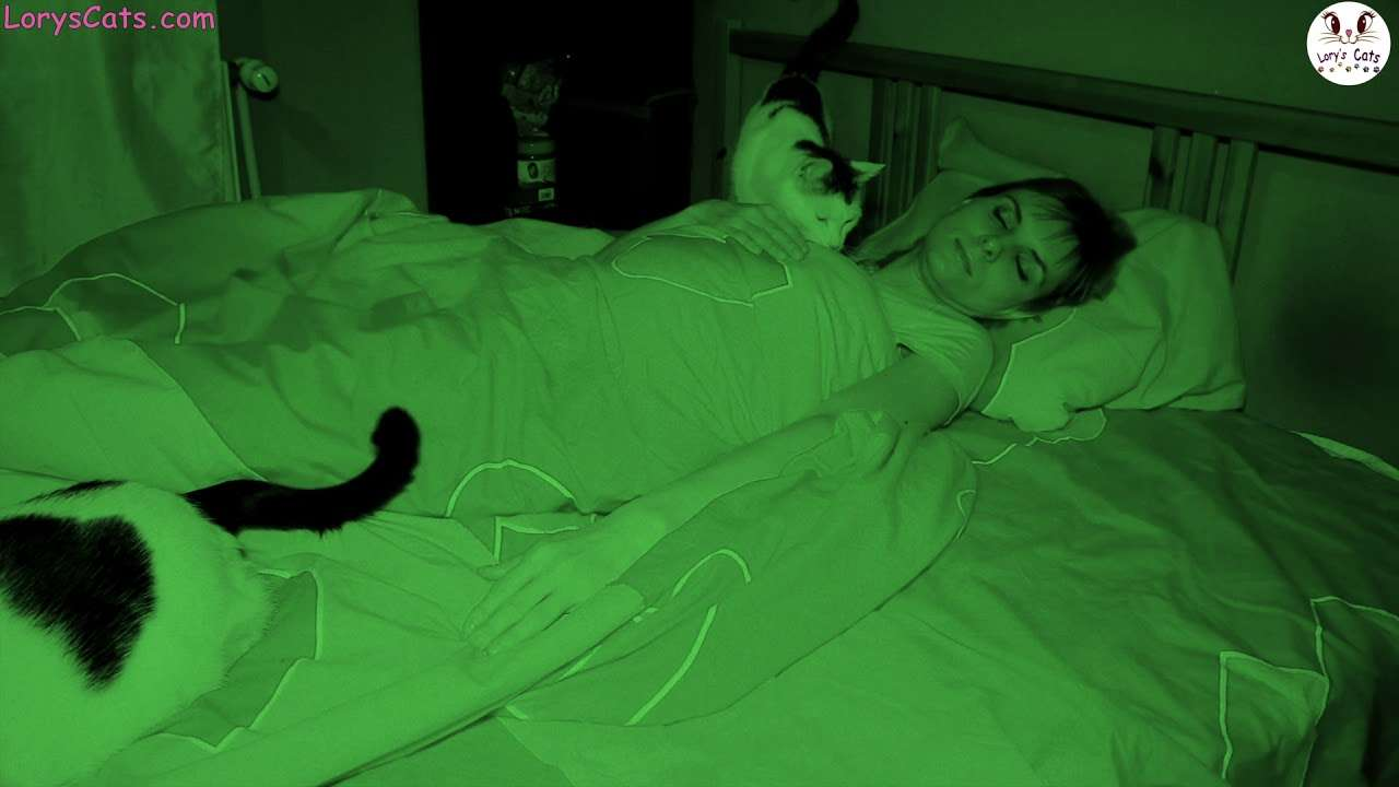 LIVING WITH CATS - Sleeping With Cats - YouTube
